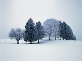 Group of trees in winter Photographic Print by Herbert Kehrer