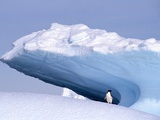 Antarctica, adelie penguin in front of iceberg Photographic Print by Frans Lemmens