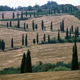 Cypresses and stubble fields in the Tuscany Photographic Print by Wolfgang Meier