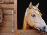 Horse sticking head out stable window Photographic Print by Brigitte Sporrer