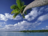 Coconut palm, One Foot Island, Aitutaki, Cook Islands Photographic Print by Frank Krahmer