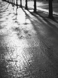 Sunlight reflecting on wet road Photographic Print by Thomas Kruesselmann