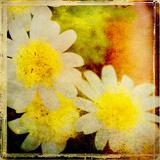 Vintage Garden I Prints by Amie Mack