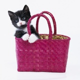 Kitten in Basket Photographic Print by Pat Doyle