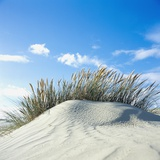 Sand dune with beach grass, (Eiderstedt), Schleswig-Holstein, Germany Photographic Print by Guenter Rossenbach