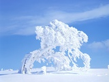 Snow-Laden Tree in Black Forest Winter Scene Photographic Print by Herbert Kehrer