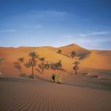 Palm Trees and Sand Dunes Fotografisk tryk af José Fuste Raga