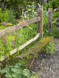 Flower Garden with Old Wood Fence Papier Photo par Mark Bolton