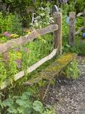 Flower Garden with Old Wood Fence Fotografie-Druck von Mark Bolton