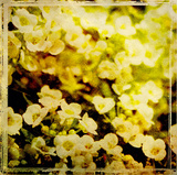 Vintage Garden VII Posters by Amie Mack