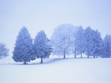 Trees in snow-covered landscape in winter Photographic Print by Herbert Kehrer