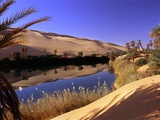 Oasis at Um Al Ma salt lake, Sahara desert, Ubari, Libya Lmina fotogrfica por Frans Lemmens