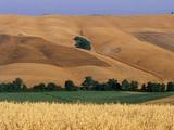 Italy, Tuscany, Crete Senesi Photographic Print by Sergio Pitamitz