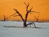 Dying trees at sunset Fotografisk tryk af Eddi Boehnke