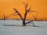 Dying trees at sunset Fotodruck von Eddi Boehnke