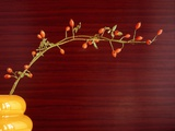 Twig with rose hips in vase