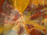 Cross-Section of Petrified Wood Photographic Print by Kevin Schafer