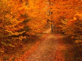 Unpaved Road in Autumn Photographic Print by Cody Wood