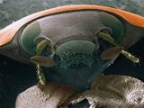 Microscopic View of Ladybug Photographic Print by Jim Zuckerman