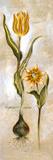 Tulipa Violoncello VI Prints by  Augustine