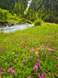 Beautiful Meadow with Stream Photographic Print by Frank Krahmer
