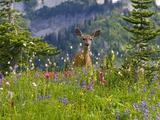 Craig Tuttle - Deer in Wildflowers Fotografická reprodukce