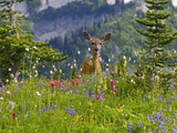 Deer in Wildflowers Fotoprint van Craig Tuttle