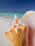 Still life of seashell at beach Photographic Print