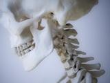 Skeleton head Photographic Print by Robert Llewellyn