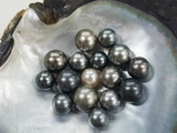 Black Pearls in Shell Photographic Print by Sergio Pitamitz