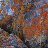 Red Lichen on Rocks Photographic Print by Micha Pawlitzki