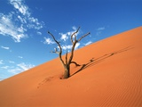 Dead tree in the Namib-Naukluft-Park, Namibia Photographic Print by Eddi Boehnke