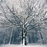 Snowcovered forest Photographic Print by Angelo Christo