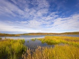 Tundra Marsh Photographic Print by John Eastcott & Yva Momatiuk