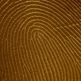 Human Fingertip Photographic Print