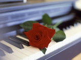 Red Rose on Piano Lmina fotogrfica