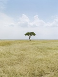 Acacia Tree, Masai Mara National Park, Kenia Photographic Print by Erik P.