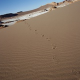 View of footprints leading over a sand dune Photographic Print