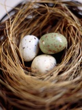 Eggs in Nest Photographic Print by Kate Mitchell