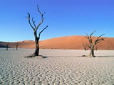 Desert in Namib Naukluft Park - Namibia Photographic Print by Theo Allofs