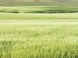 Rolling Grassland Photographic Print by Frank Krahmer