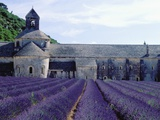 Lavender Field at Abbeye du Senanque Photographic Print by Owen Franken