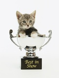 Kitten in Trophy Photographic Print by Pat Doyle