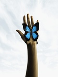 Butterfly on a human's palm Photographic Print by Colin Anderson