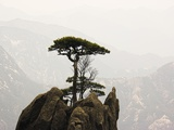 Pine Tree on Mountaintop Photographic Print by Frank Lukasseck