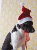 Dog Wearing Santa Hat Photographic Print by Sandra Seckinger
