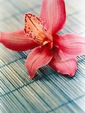 Bloom of a orchid. Photographic Print by Brigitte Sporrer