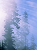 USA, California, Redwood National Park, forest and sun rays Photographic Print by Theo Allofs