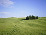Cypresses on a meadow in the Tuscany Photographic Print by Eberhard Streichan