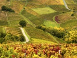 Vineyards in Beaujolais Region Photographic Print by Bryan Peterson